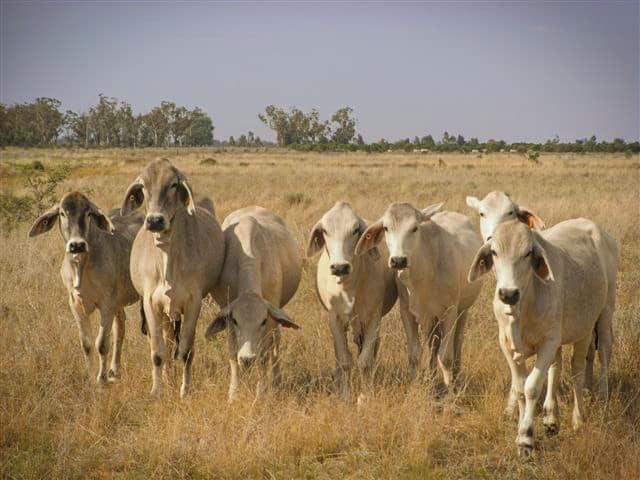 The Biggest Farms in the World - Australia