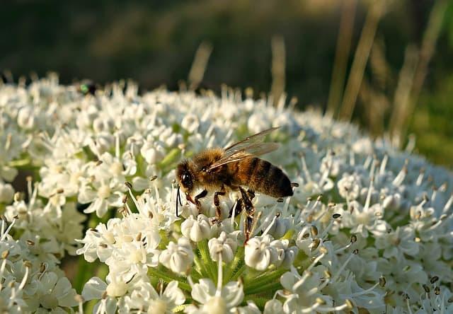 honey resources Romania