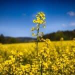 Biodiesel – definition and benefits