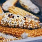 Symptoms of the Most Common Corn Ear Rots