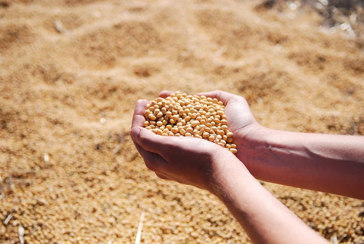 China GMO crops controversy