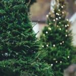 Biggest Christmas trees in the world
