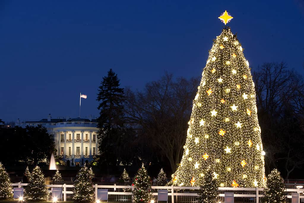 White House National Christmas tree