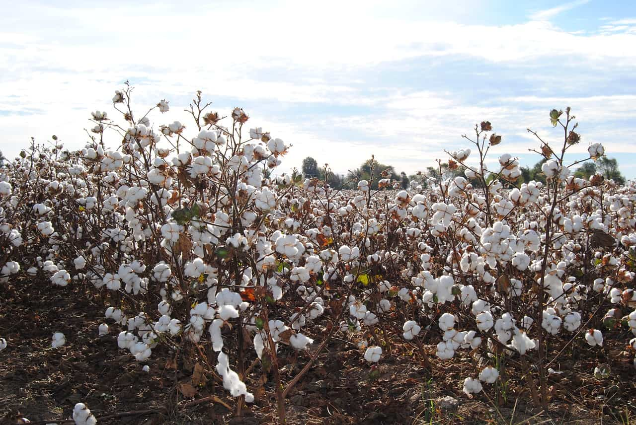Cotton Belt, USA