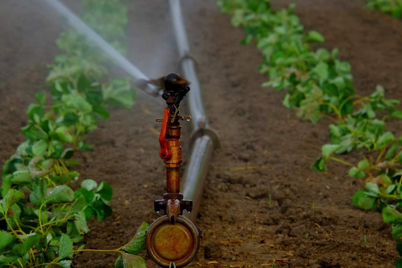preserving water challenge