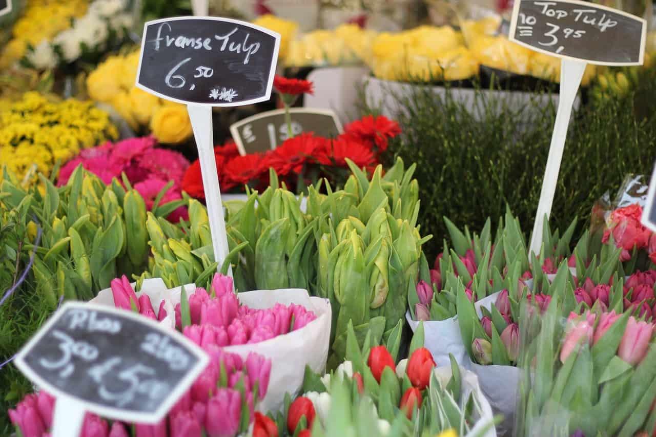 tulip flower market