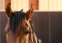 rarest horse breeds