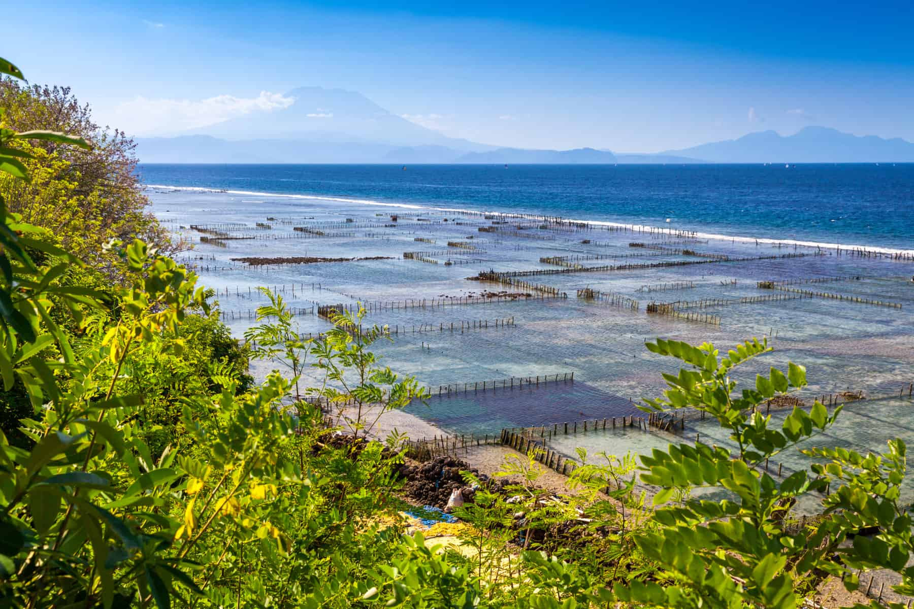 Economic impact of algae farms