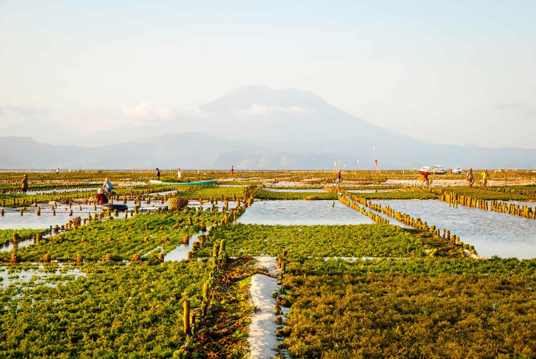 Tips on how to start an algae farm