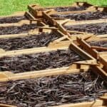 Vanilla price hits all-time record in 2018