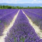 Famous agricultural areas in the world – Provence, France