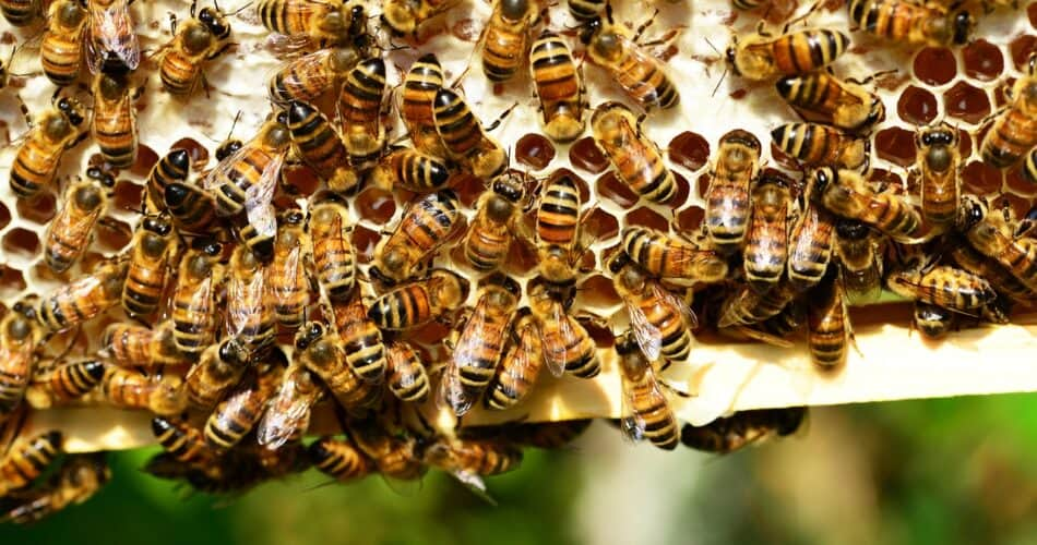 neonicotinoid pesticides banned in Canada