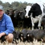 Knickers, Australia's biggest cow becomes Internet famous