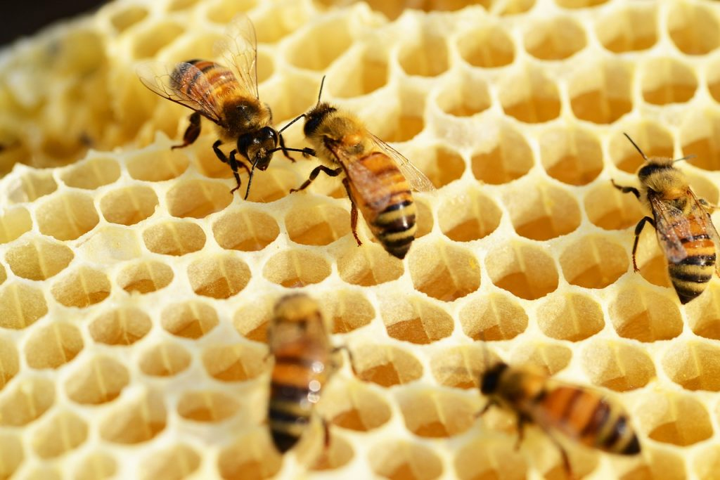 Bees using honey for food