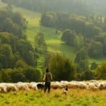 20 best movies and documentaries about farming