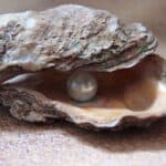 Pearl farming and its impact on marine life