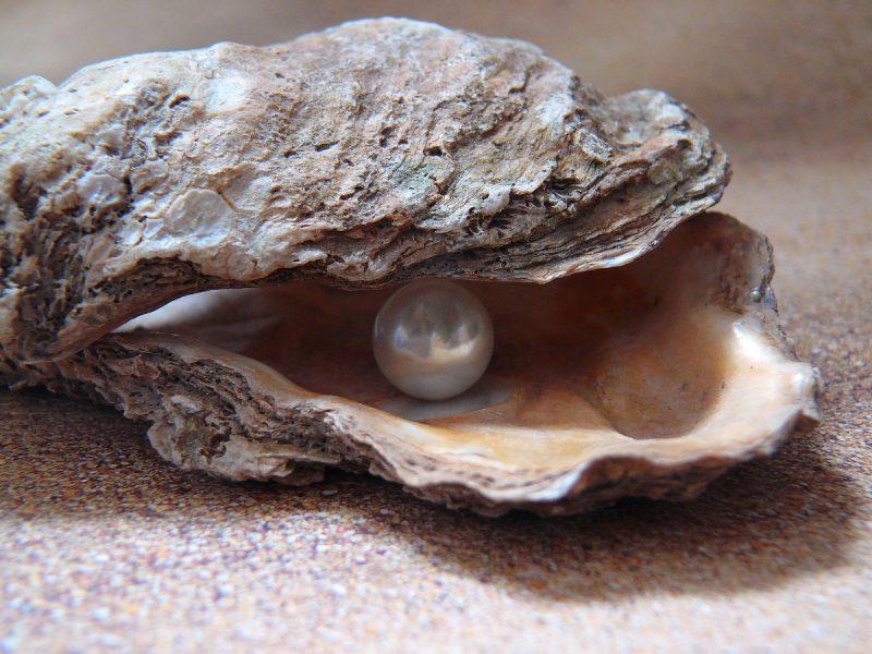 pearl farming and marine life