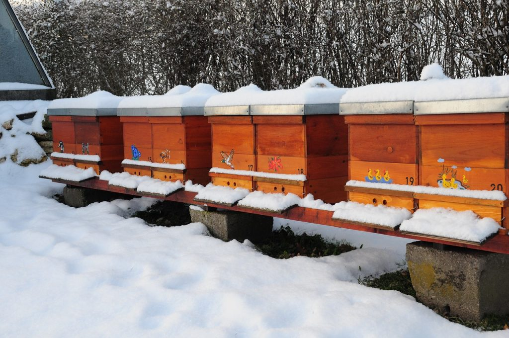 reduce bee losses during winter
