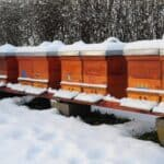 Minimizing winter losses in the bee colony and increasing honey production