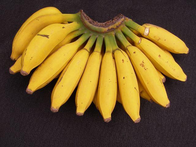 Goldfinger bananas