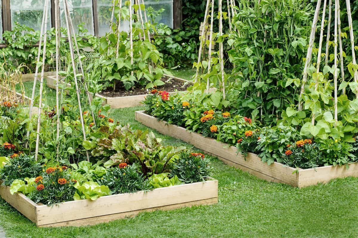 Set Up Your Garden Beds