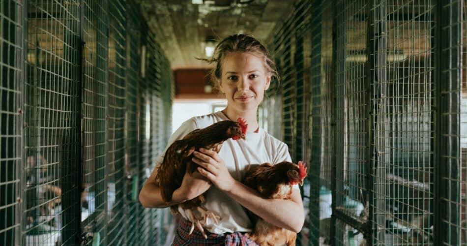 Designing a Chicken Coop