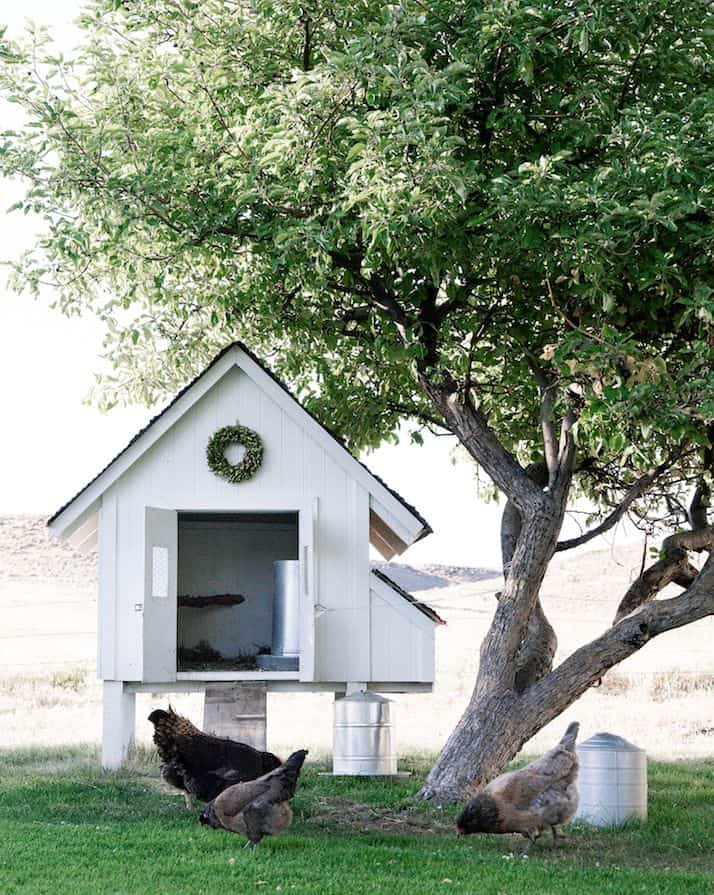 Small All White Chicken Coop