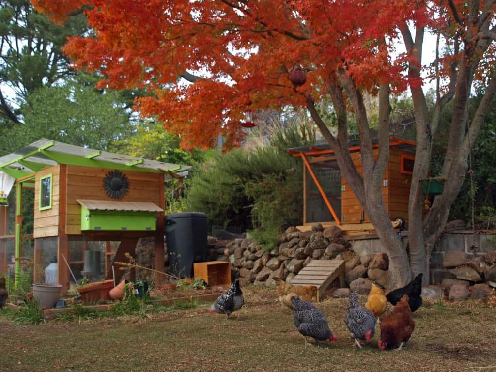 The Garden Coop