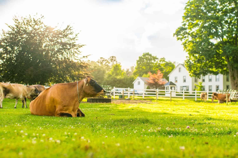 Arethusa Farm Connecticut