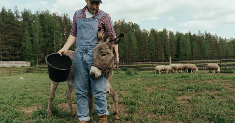 Best Farmer Boots