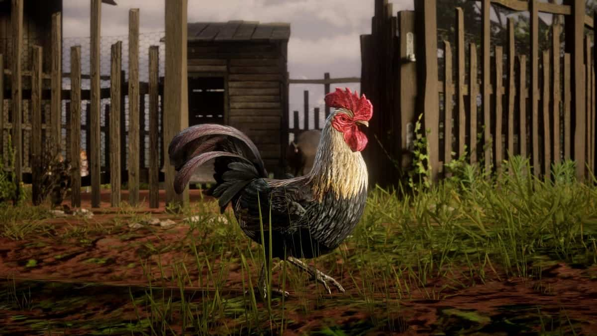 Java Rooster