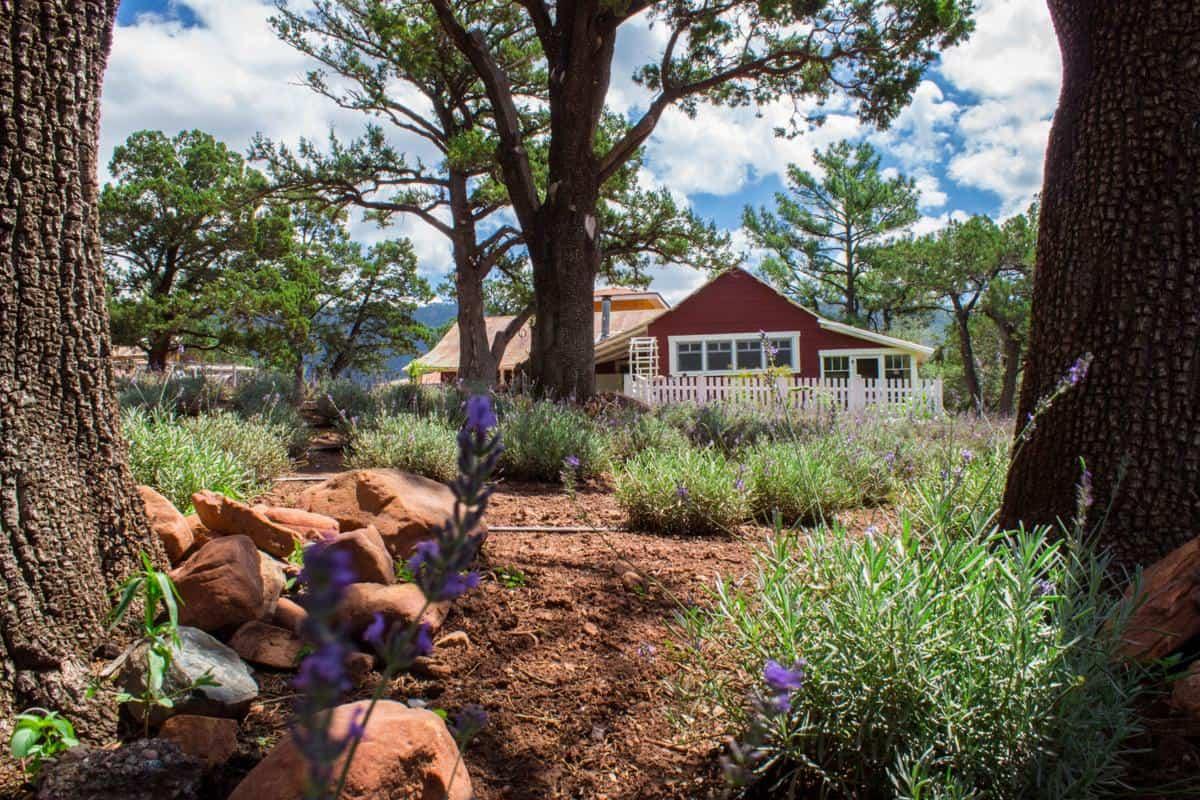 Pine lavender farm in Arizona